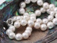 Náhrdelník 10mm biele shell perly